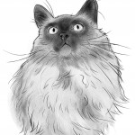 Fluffy Cat Portrait