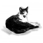 Black & White Cat Portrait