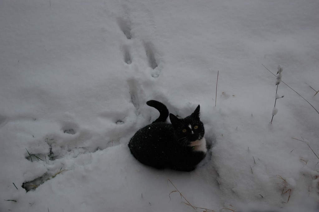 My Kitty in the Snow